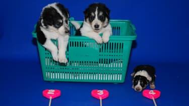 La Sooam Biotech Research Foundation s'est spécialisée dans le clonage d'animaux de compagnie.