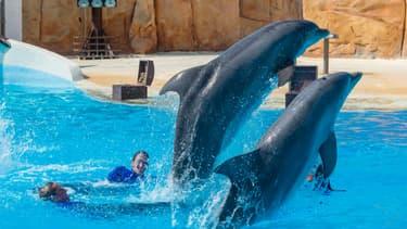 Des dauphins du Parc Astérix.