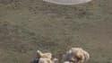 Une capsule Soyouz, équipée d'un parachute, a atterri mardi sur les steppes du Kazakhstan avec à son bord trois astronautes qui ont passé six mois sur la Station spatiale internationale (ISS). /Photo prise le 24 mai 2011/REUTERS/Mikhail Metzel/Pool
