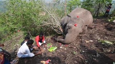 En Inde, la triste découverte de 18 dépouilles d'éléphants interroge