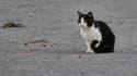 Les chats errants bientôt expulsés d'Israël?