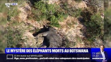 Planète Ashley - Le mystère des éléphants morts au Botswana