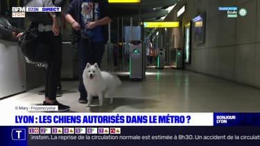 Lyon: les chiens bientôt autorisés dans le métro?