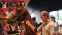 """Un yearling dans le """"ring"""" devant des enchérisseurs passionnés de sports équestres à Deauville."""