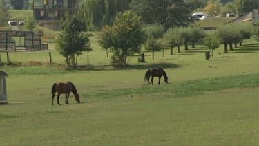 Des chevaux (photo d'illustration).