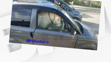 Le poney assis dans le véhicule sans permis, ce jeudi.