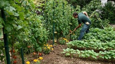 Les plants potagers considérés sont désormais autorisés à la vente