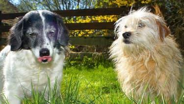 Les deux chiens sont restés enfermés pendant deux jours dans un véhicule (Photo d'illustration).