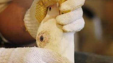 Confrontée à une campagne mondiale contre le gavage des volatiles, la France forme ses producteurs de foie gras aux nouvelles normes européennes censées couper l'herbe sous les pieds des détracteurs de cette pratique. /Photo d'archives/REUTERS/Mathieu Bel