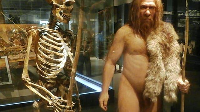 Le squelette d'un homme de Néandertal et sa modélisation au musée des Sciences naturelles de Tokyo, au Japon (Photo d'illustration)