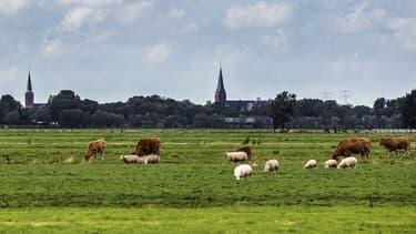 Image d'illustration - le maire veut protéger les bruits produits par les animaux  de la campagne, mais aussi les tracteurs ou les cloches des églises