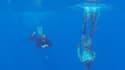 Des plongeurs de la marine australienne à la recherche de débris du vol MH370, le 8 avril 2014