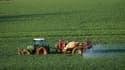 Champ de blé dans le sud de la France. (Illustration)