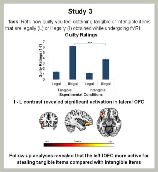 Les résultats des tests d'imagerie médicale montrant l'effet des vols matériels et immatériels sur l'activité du cerveau.