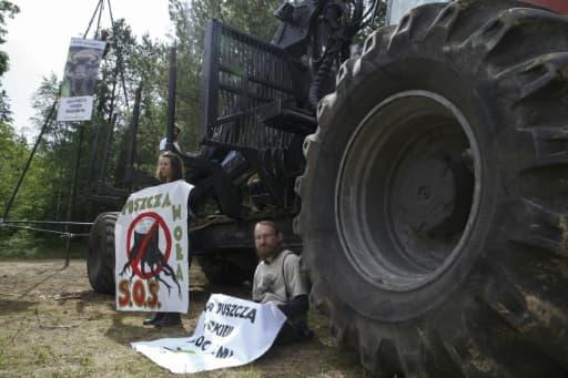 Des écologistes bloquent des engins forestiers utilisés pour la coupe des arbres de la forêt de Bialowieza (est de la Pologne), le 8 juin 2017
