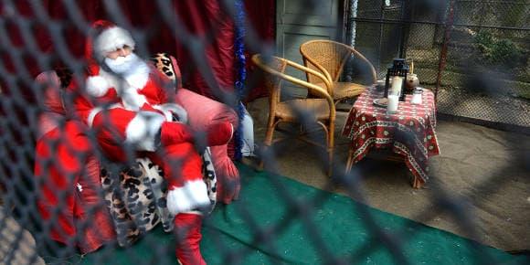 Un faux Père Noël enfermé au zoo de Prague