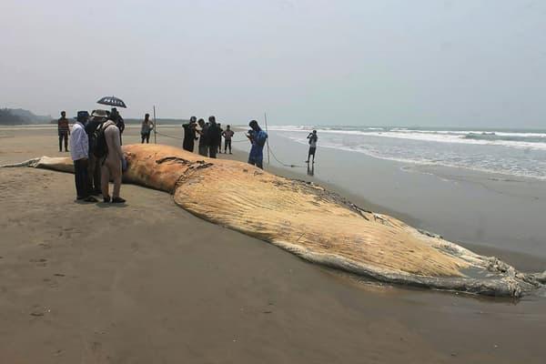 Une baleine échouée sur une plage de Cox's Bazar au Bangladesh, le 10 avril 2021