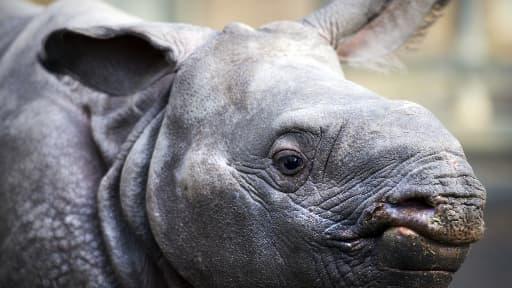 668 rhinocéros ont été tués par des braconniers en Afrique du Sud en 2012