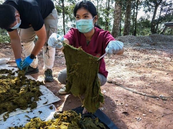 Les vétérinaires examinent des déchets découverts dans l'estomac du cerf retrouvé mort au parc national de Khun Sathan, en Thaïlande