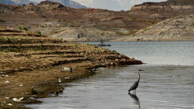 A cause de la sécheresse, de faibles niveaux d'eau sont enregistrés au lac Mead alimenté par le fleuve Colorado.