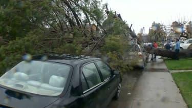 La tempête a fait un mort, écrasé par un arbre. (Photo d'illustration)