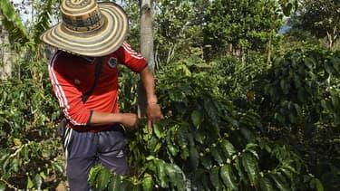 Selon le scénario d'un réchauffement modéré ou élevé (plus de 2 degrés Celsius), d'ici 2050, la production de graines serait réduite de 73 à 88% dans les zones les plus propices aujourd'hui à la culture du café,