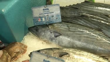 La bonite ne devrait pas être aussi répandue qu'elle l'est cet automne sur les étals des poissonniers.