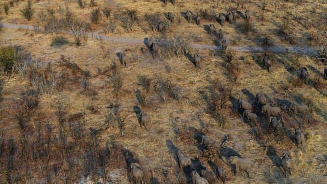 Des éléphants dans une plaine de la région de Chobe, au Botswana, le 19 septembre 2018