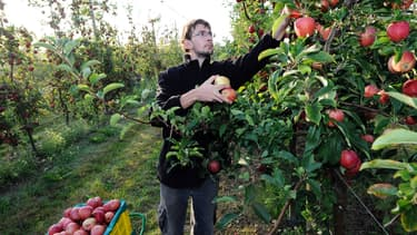YoJob-Agriculture veut permettre aux recruteurs de trouver des saisonniers fiables.