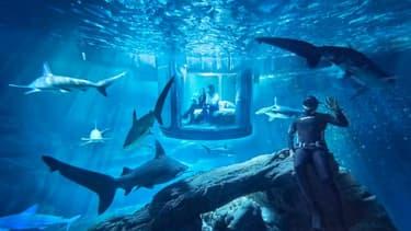 Airbnb propose de passer une nuit au milieu des requins à l'Aquarium de Paris.