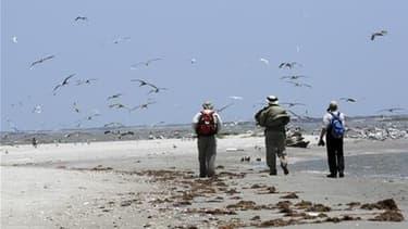 Equipe d'inspection des plages à Raccoon Island, en Louisiane, face aux risques de marée noire. Le gouvernement américain maintient la pression sur BP, qui éprouve des difficultés à colmater la fuite de pétrole après le naufrage d'une plate-forme pétroliè