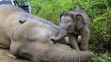 Les défenses de l'éléphant sont intactes, laissant entendre que le pachyderme n'avait pas été tué pour son ivoire, qui se vend pourtant cher au marché noir.