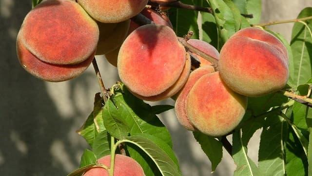 Les consommateurs, eux, font plus attention aux prix des fruits qu'ils achètent, qu'à leur origine...