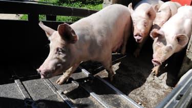 En 2018, 582 fermes françaises étaient engagées en porcins bio