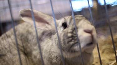Un lapin - Image d'illustration