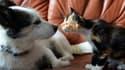 Les Français possèdent plus de neuf millions de chiens et 15 millions de chats. (Photo d'illustration)