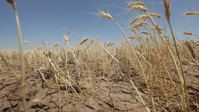 Une sécheresse - Image d'illustration