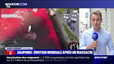 """Hugo Clément: """"Les Îles Féroé ont franchi la ligne rouge avec ce massacre où près de 1500 dauphins ont été tués en une seule fois"""""""