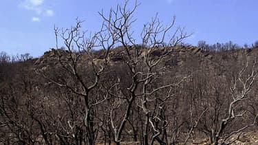 Le massif des Maures est concerné par l'alerte.
