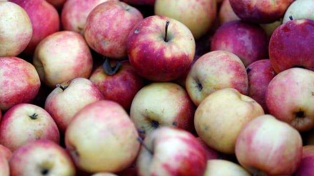 Les pommes ont été épargnées par l'épisode de gel du mois d'avril.