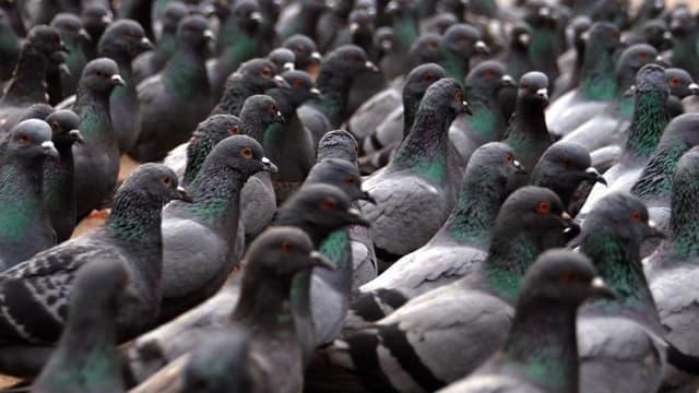 """Les pigeons, photo de profil du """"Mouvement de défense des entrepreneurs français""""."""