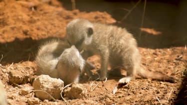 Colombie: pendant le confinement, les naissances rares se sont multipliées au zoo de Peirera