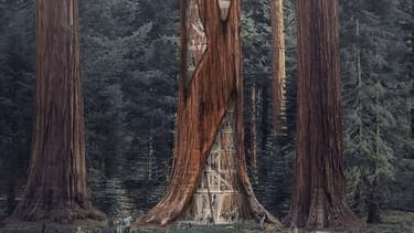 Une tour construite dans un arbre.