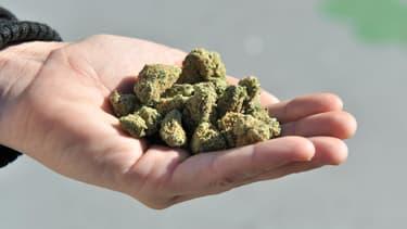Le cannabis thérapeutique pourrait bénéficier à 300.000 patients en France.