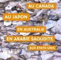 Malaisie, Chine, Philippines… Ces pays ont décidé de stopper le commerce des déchets