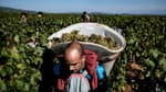 2021 restera la pire année pour le vin de Bourgogne.