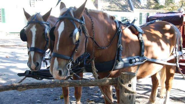 Un cheval qui tirait une calèche de touristes est mort d'épuisement à Barcelone (photo d'illustration).