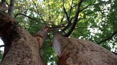 """""""L'arbre, c'est l'investissement le plus rentable que l'on puisse faire sur terre, 48 % au minimum"""" Tristan Lecomte, co-fondateur de Pur Projet"""
