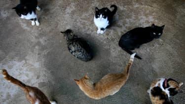 Un groupe de chats en Espagne (Photo d'illustration).
