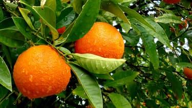 Des mandarines. (Photo d'illustration)